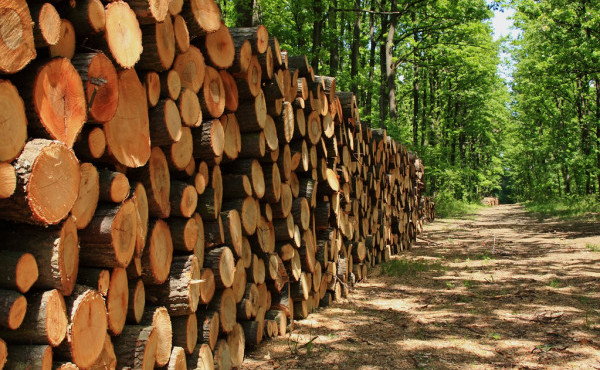 depositphotos_2707987-stock-photo-a-big-pile