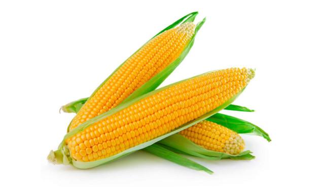 kukurudza-ukrayina
