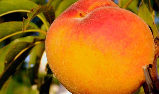 peach3c