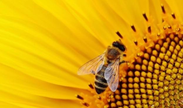 sunflower-1643794_1920-14172