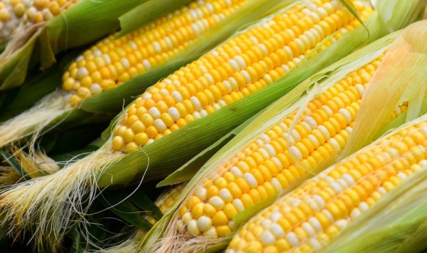 Close-Up Of Corn Cobs For Sale In Market