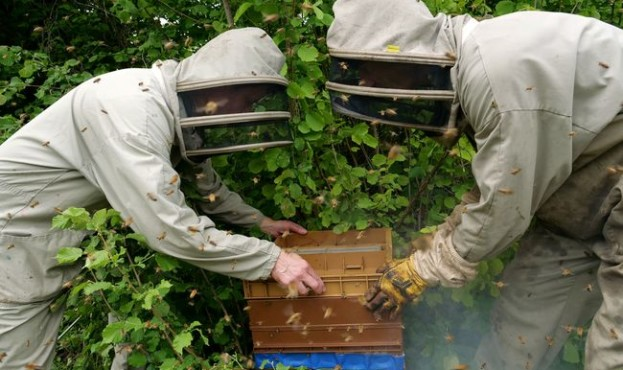 Warm spring brings bumper harvest to French beekeepers outside Paris