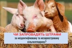 (COPY) день фермера (2)