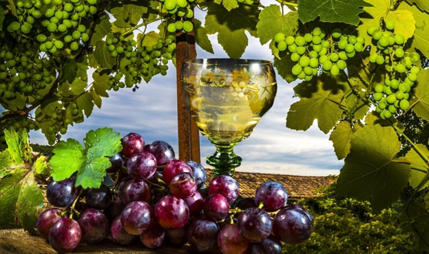 Grapes_Wine_Stemware_481795