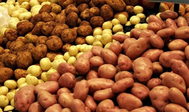 Kartofel-15684