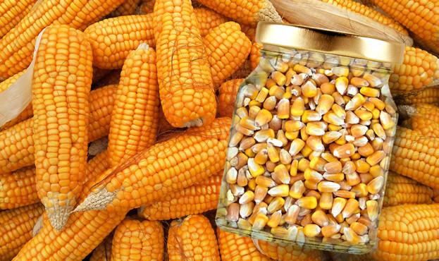 corn-1726017