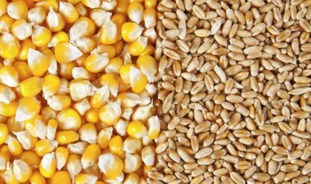 corn-wheat_AdobeStock_51798887_E-623x370
