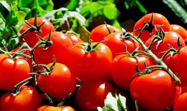 помідор-1