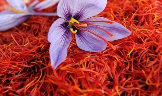 saffron_150218