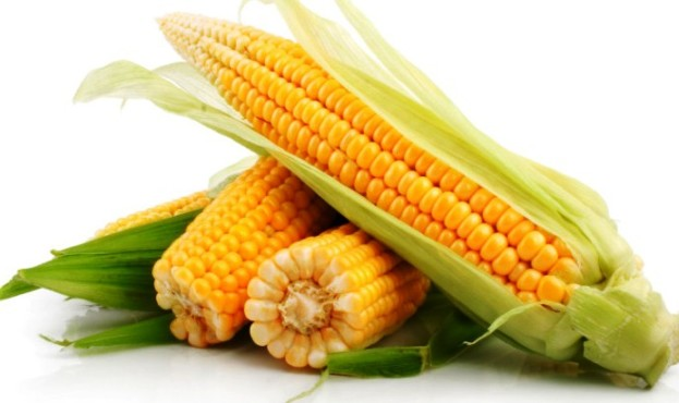 технология выращивания сахарной кукурузы