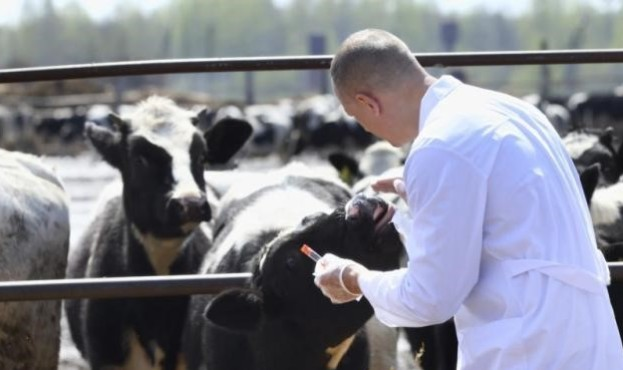 veterinar-15621