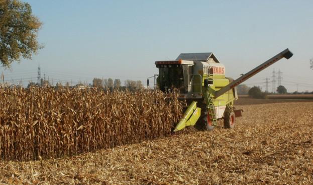 630e313-corn