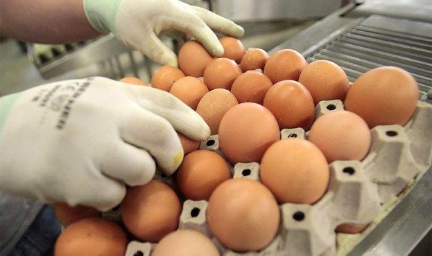 Eggs_izrael765