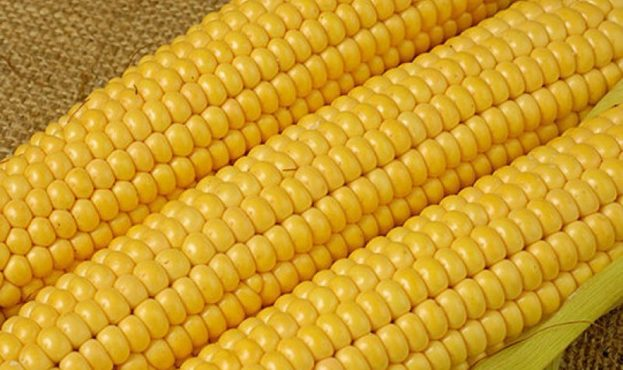 Frozen_Yellow_Sweet_Corn_Kernel_Noodle_Flour_Meal-4372-21281