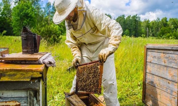 бджоляр-Суми