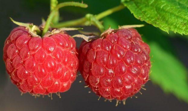 raspberry-3454504_1280-29073