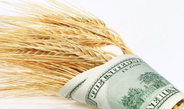 2561_wheat_and_dollars-bigstockphoto