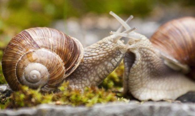 helix-grass-macro-animal-nature-snail-pomatia_121-71446