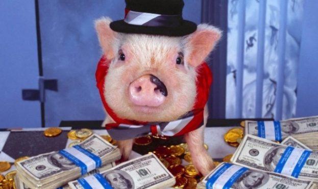 новогодняя-свинья
