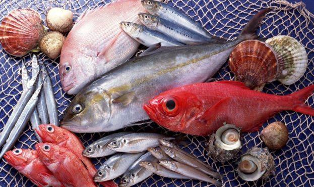 picture2_skolko-ryby-vylov_339488_p0