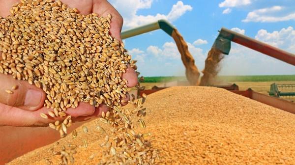 зерно-хранение_185ec