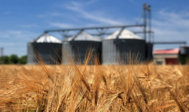 Wheat-1200x0