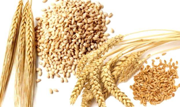 af6b2c5-barley-wheat