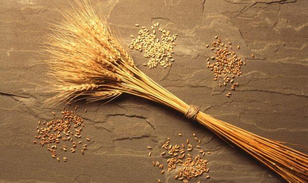 f090257-68dffa4-wheat