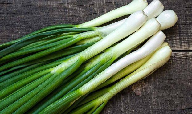 spring-onion-oblozhka