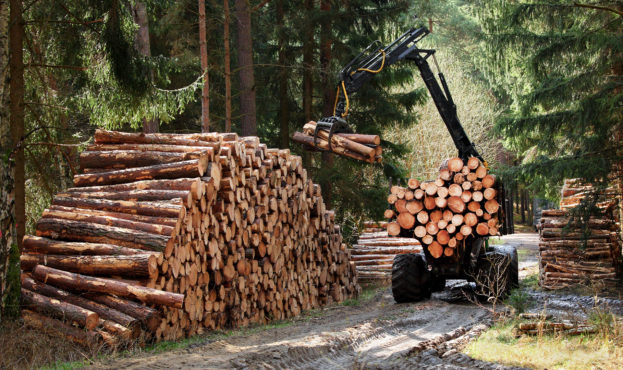 the-forest-industry_photo-shutterstock_wallenius-sol_the-enabler_1920x1080px