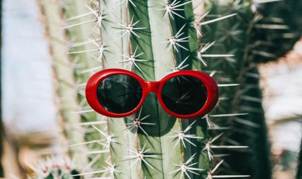 cactus-sunglasses-light-background_152625-1415