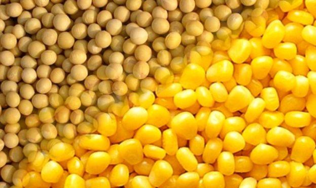 cb11ed1-soja-kukuruza
