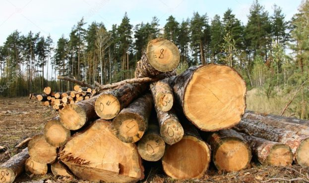depositphotos_9567105-stock-photo-pine-logs