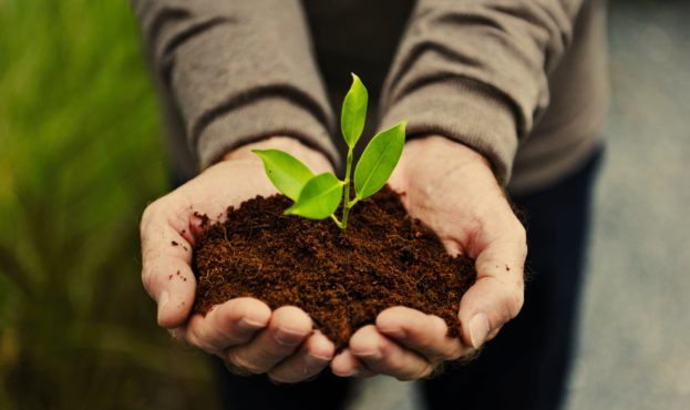 hands-holding-a-pile-of-earth-soil-with-a-growing-EJVA5SC-min-scaled