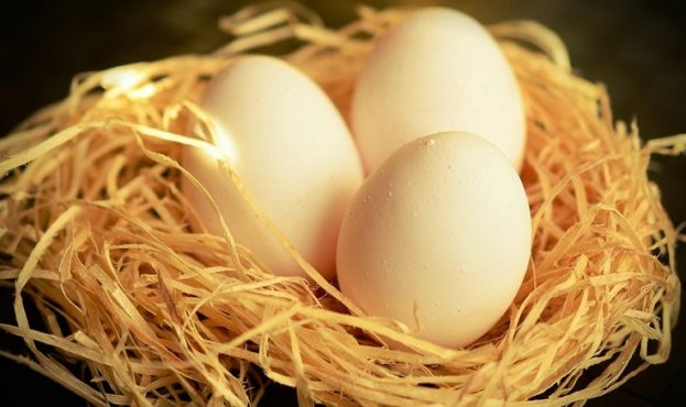 jajce-koryst