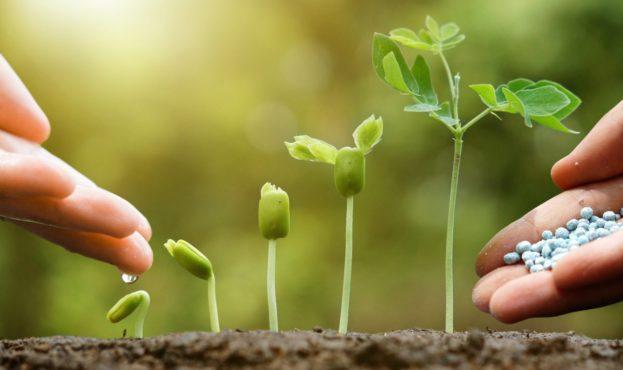 vegetables-and-fertilizer