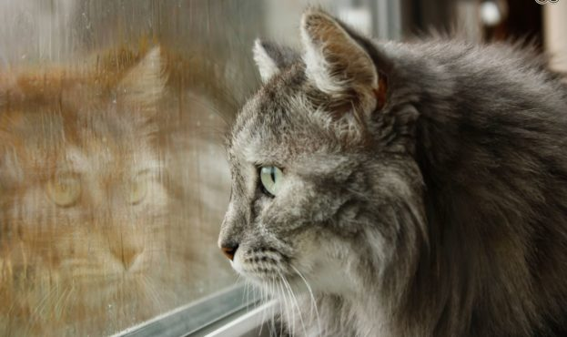 why-do-some-cats-deliberately-go-out-in-the-rain-57f25e63904b0