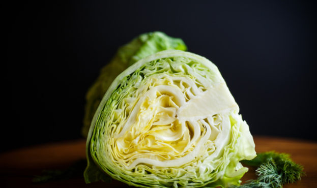 cabbage young green