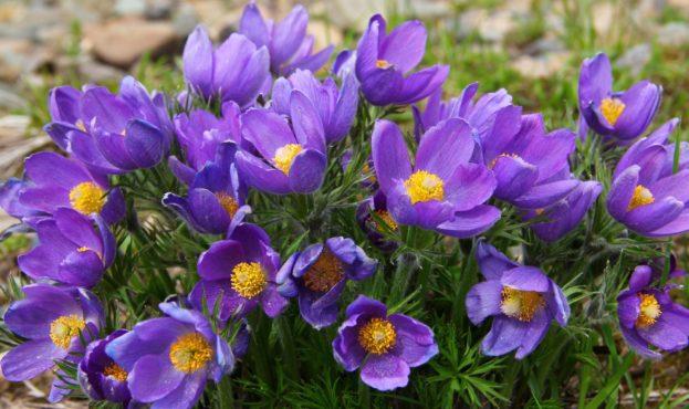 kartinki24_ru_spring_flowers_38