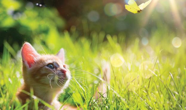Kocie-z-motylem