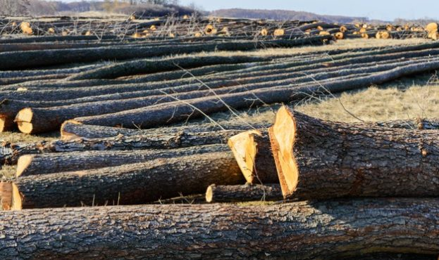 the-felled-trees-lie-on-the-ground-large-logs-peeled-trunks-from-branches-cleaning-forests_193819-2715