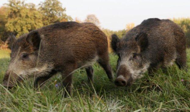 wild-hogs-8482