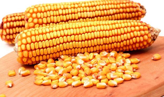 55e2796-corn