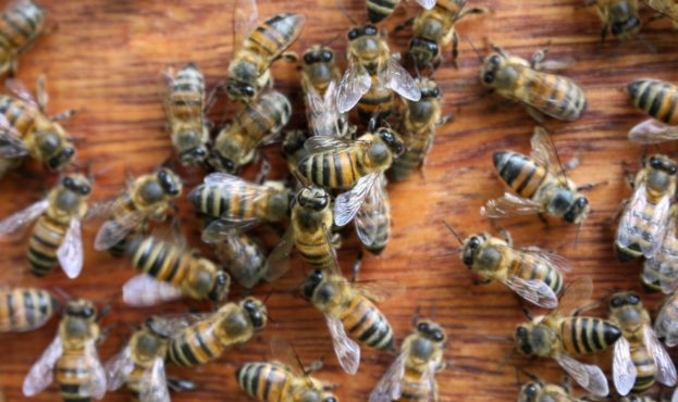 bees-4682096_1920