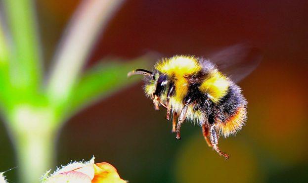 bumble-bee-2361336