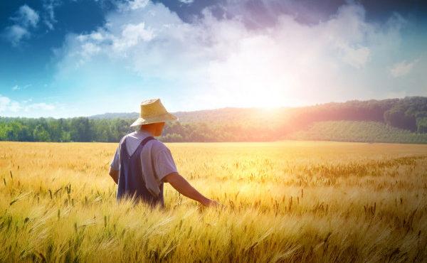 depositphotos_3521547-stock-photo-farmer-walking-through-a-wheat