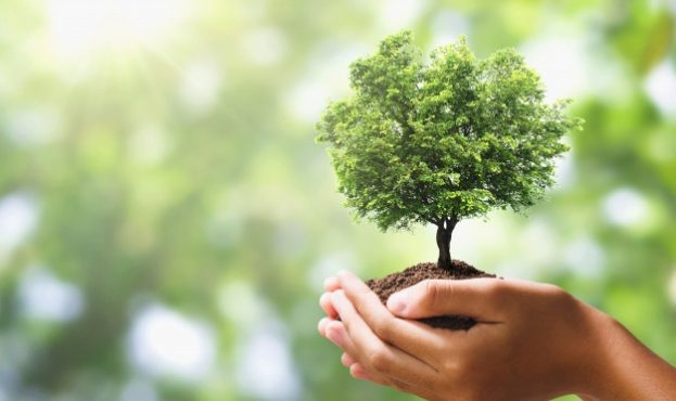hand-holding-tree-on-blur-green-nature-background-eco-earth-day_34152-1973