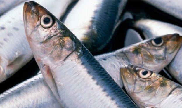 seledka-polza-i-vred-ryby-dlya-vzroslyh-i-detej