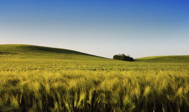 spring-wheatfield-QG24Y3U-min