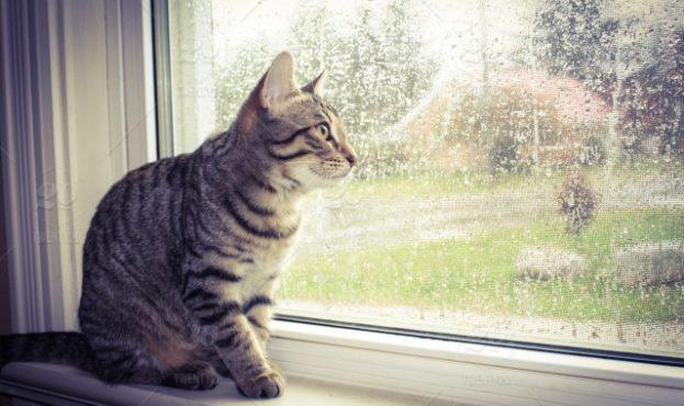 stock-photo-rain-weather-window-cat-rainy-windowsill-rainyday-dde37002-e84f-4d00-bc79-ce0036ec40c5